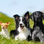 Will your cute puppy name suit your full grown dog?